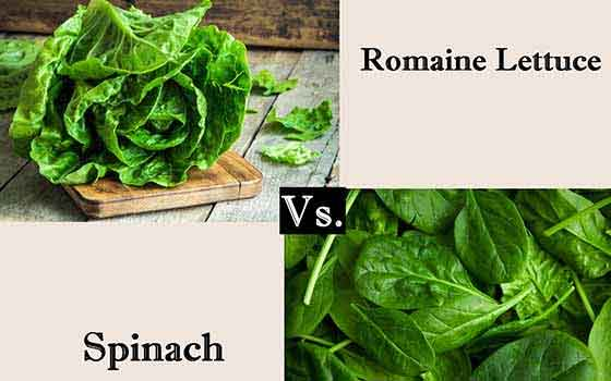RomainVsSpinach