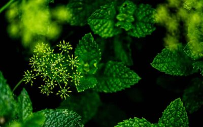 Antiviral Natural Herbs For Lung Mucus Clearing